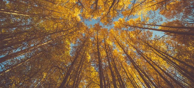 Autumn Months – Tips On Keeping Loved Ones Safe